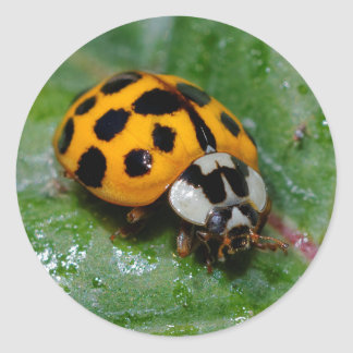18-Spotted Yellow-and-Black Ladybug Round Sticker