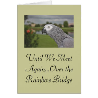 African Grey Parrot Pet Sympathy Greeting Card
