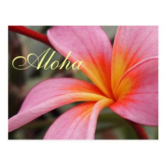 Aloha Hawaiian Frangipani Blossoms Plumerias Postcard