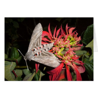 Amazing Moth Picture Taken in Zambia Note Card