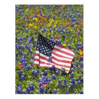 American Flag in field of Blue Bonnets, Postcard