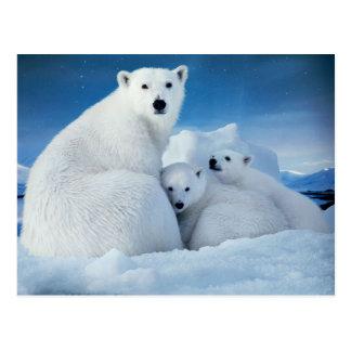 Arctic Polar Bear with Cubs Postcard