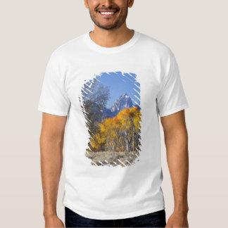 Aspen trees with the Teton mountain range 3 T Shirts