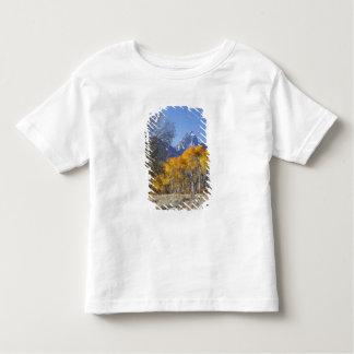 Aspen trees with the Teton mountain range 3 Tee Shirts