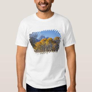 Aspen trees with the Teton mountain range 4 Shirt
