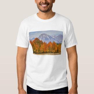 Aspen trees with the Teton mountain range 5 Tshirts