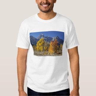 Aspen trees with the Teton mountain range Shirts