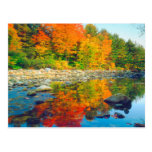 Autumn Colours reflecting in a stream in Vermont Postcard