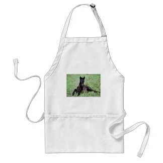 Baby foal lying in the meadow standard apron