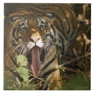 Bengal tiger resting, yawning ceramic tile