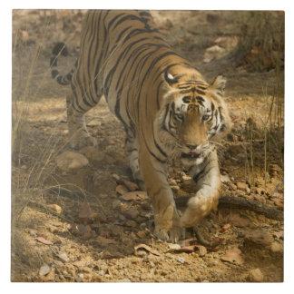 Bengal Tiger walking Ceramic Tile