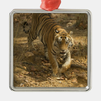 Bengal Tiger walking Silver-Colored Square Ornament