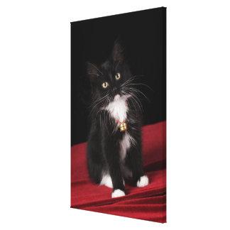 Black & white short-haired kitten,2 1/2 months canvas print