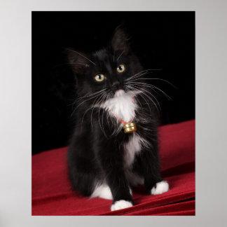 Black & white short-haired kitten,2 1/2 months poster