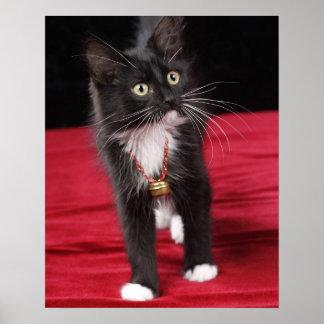 Black & white short-haired kitten, 2 1/2 months poster