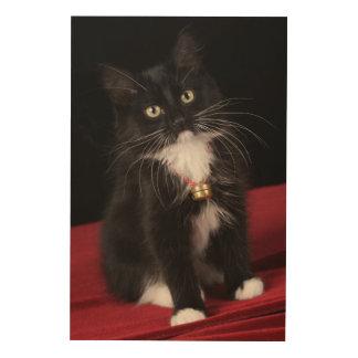 Black & white short-haired kitten,2 1/2 months wood canvases
