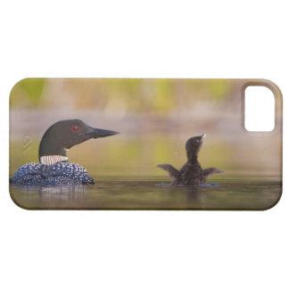 Canada, British Columbia,Common Loon, breeding 3 iPhone 5 Covers