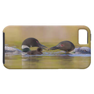 Canada, British Columbia,Common Loon, breeding iPhone 5 Cases