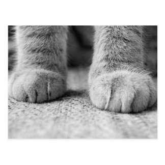 Cat Paws Post Card