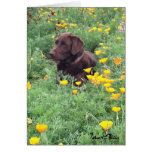 Chocolate Lab In California Poppy Patch Photograph Greeting Card