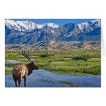 Colorado Rocky Mountains Elk Greeting Card