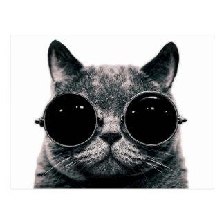 COOL CAT. POSTCARD
