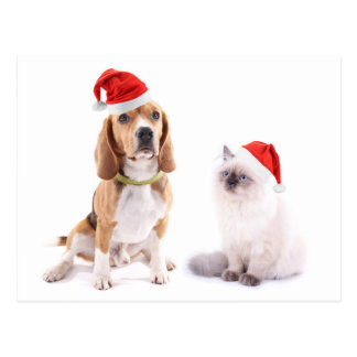 Cute Dog And Kitten With Christmas Hats Postcard