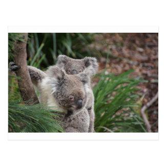 Cute Nature Jungle Tree Safari Koala Animals Bear Postcard