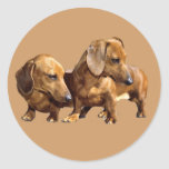 Dachshund Smoothies Sticker