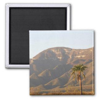Desert ranch landscape near Monterey, Mexico. Square Magnet