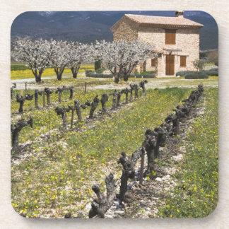 Dormant vineyard, fruit blossoms, stone house, coasters
