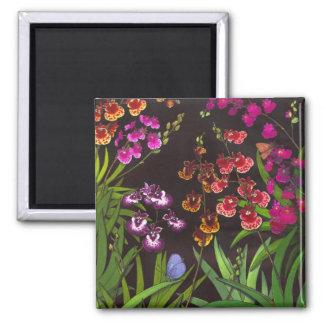Equitant Oncidium Tolumnia Orchids Magnet