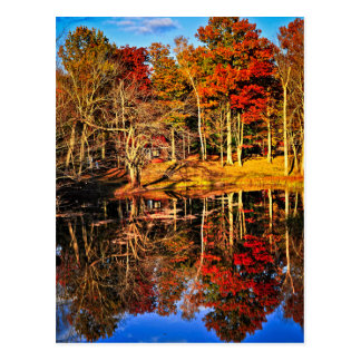 Fall forest reflections postcard