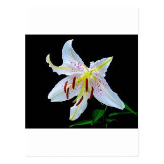 Flowers Lilies Blossoms Wedding Shower Love Peace Postcard
