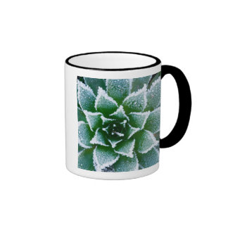 Hen & Chicks succulent with frost in the early Ringer Coffee Mug