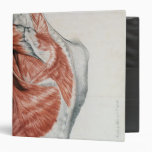 Human Anatomy; Muscles of the Torso and Shoulder Vinyl Binder