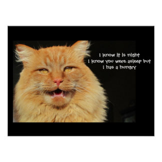 Hungry Talking Cat  haiku Poster
