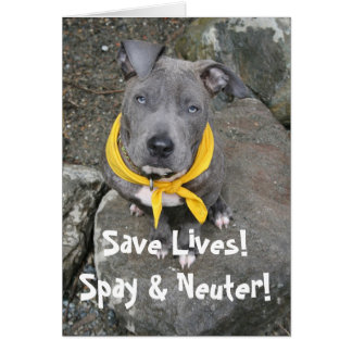 IMG_6802, Save Lives!  Spay & Neuter! Greeting Card