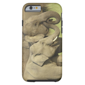 Indian / Asian Elephants sharing a Tough iPhone 6 Case