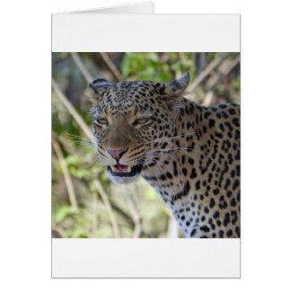 Leopard Cat Animal Africa Jungle Country Destiny Greeting Card