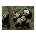 Melanoleuca d'Ailuropoda de bébés de panda géant)  Carte De Vœux