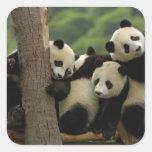 Melanoleuca d'Ailuropoda de bébés de panda géant) Sticker Carré
