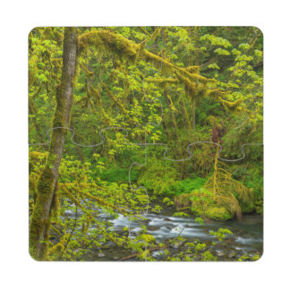 Mossy Rocks And Trees Line Eagle Creek Puzzle Coaster
