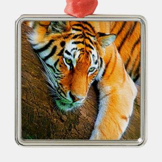 My-Galaxy-Note2-Wallpaper-HD-Animals%20(128).jpg Silver-Colored Square Ornament