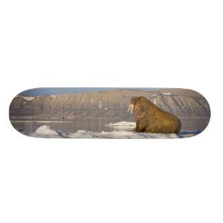 Norway, Svalbard, Edgeoya Island, Walrus Custom Skateboard