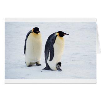 Penguin frozen ice snow bird weather cute animals greeting card