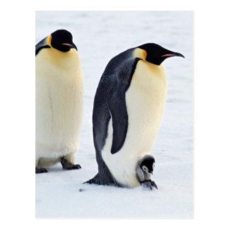 Penguin frozen ice snow bird weather cute animals postcard
