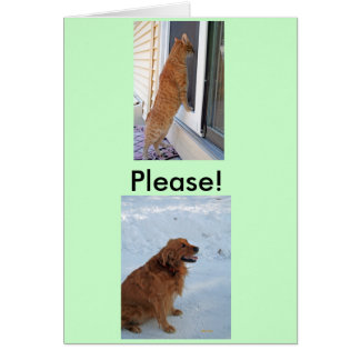 Please!  Spay or Neuter! Greeting Card