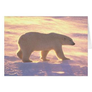 Polar Bear Morn 3 Card
