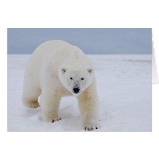polar bear, Ursus maritimus, on ice and snow, Greeting Card